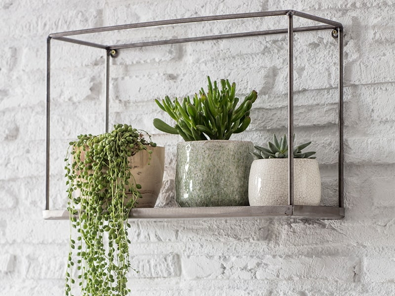 Assortment of pots with green houseplants on a contemporary metal box shelf attached to a white brack wall