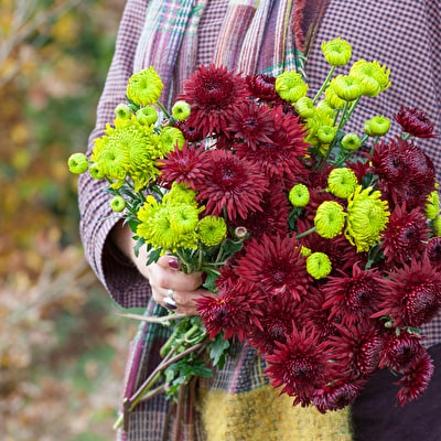 Deep Red & Green Chrysanths Collection