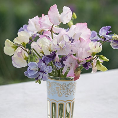 Mother of Pearl Sweet Pea Mix