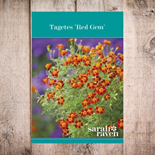 Tagetes tenuifoila 'Red Gem'