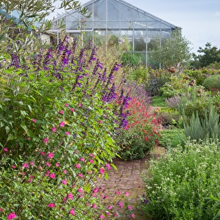 The Salvia Collection