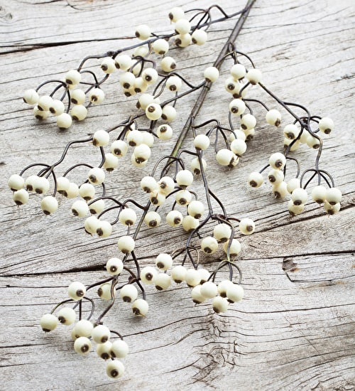 Everlasting Snowberry Branch
