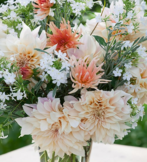 The Queen's 90th Birthday Dahlia Collection