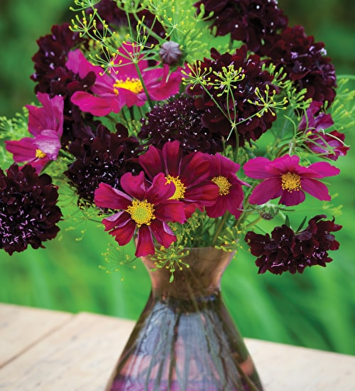 Dark Cut Flower Mix