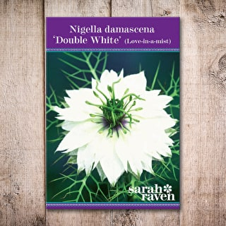 Nigella damascena 'Double White'