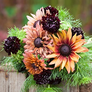 Rudbeckia Scabious and Ammi Collection