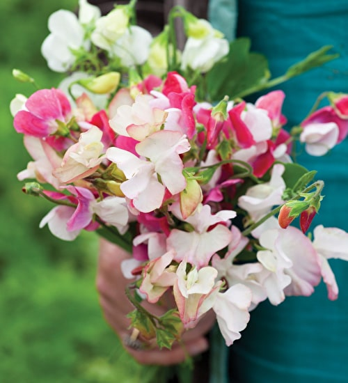 Opal Sweet Pea Mix
