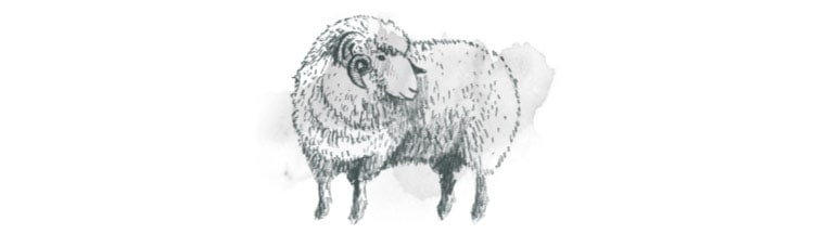 Seasalt illustration of a Merino sheep