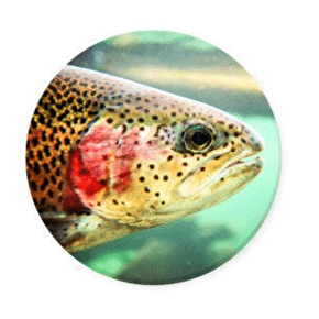 PopSockets - Trout Head