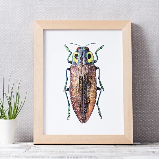 Beetle Photographic Print